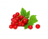red-currant1